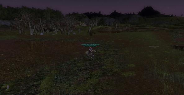 Bearmark foraging the Midgewater Marshes for honey