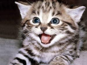 happy-kitten-meme-original-1024x768